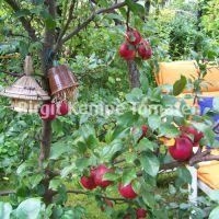 Gartengestaltung_11
