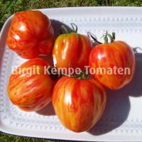 Gefuellte_Paprika-Tomate