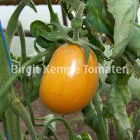 Orange_Plum