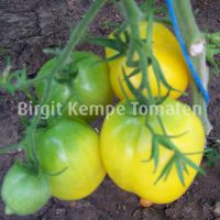 Plum_Lemon