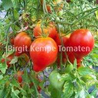 Rotes_Herz