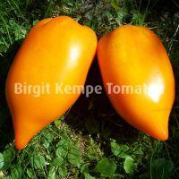 Yellow_Pepper_2